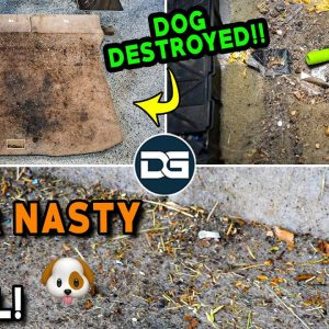 Super Cleaning a DISASTER Dog Destroyed Ford Edge! | CRAZY Disaster Detail Transformation