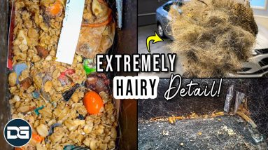 Deep Cleaning a SUPER HAIRY Dog Kennel on Wheels! | Insane Pet Hair Removal and Transformation!