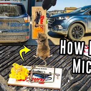 Cleaning A Farm Girl's Vehicle That Was INFESTED With Mice...